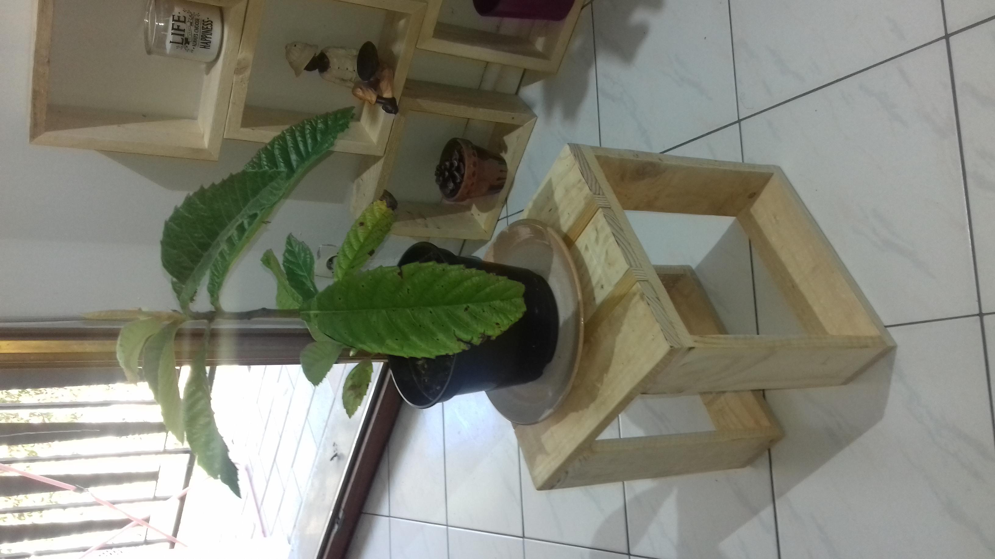 tabouret en bois de palette pour plante creation palette. Black Bedroom Furniture Sets. Home Design Ideas